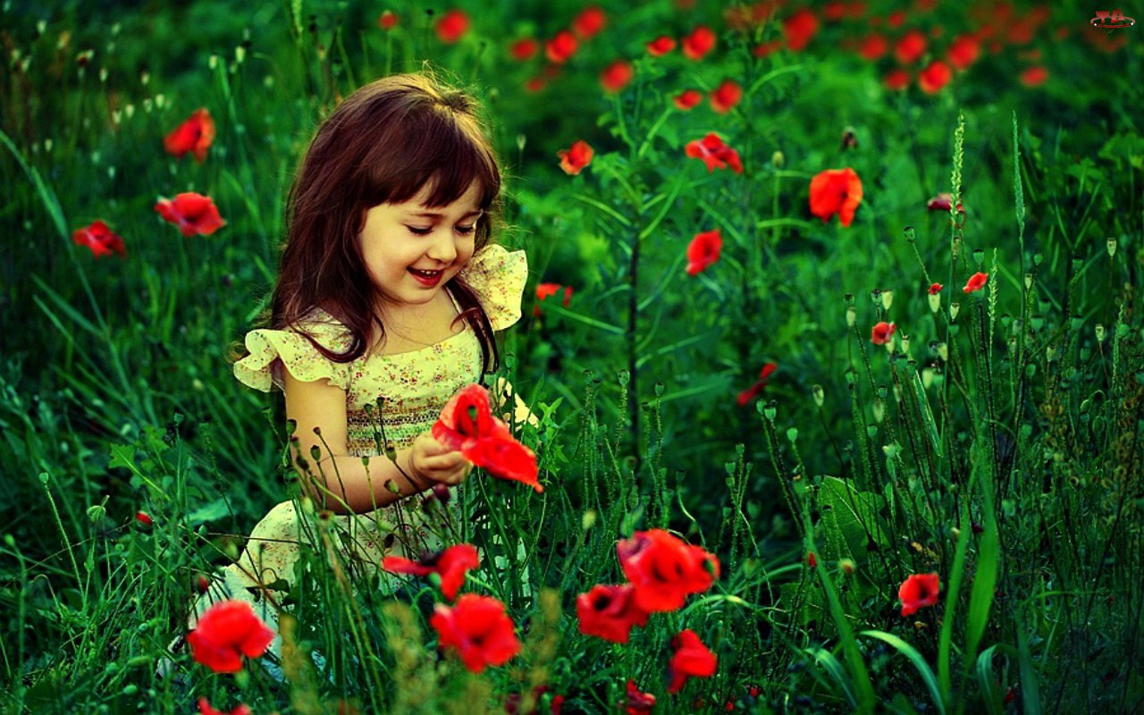 Cute Baby Girl With Red Flowers HD Wallpaper | Cute Little Babies Wallpaper