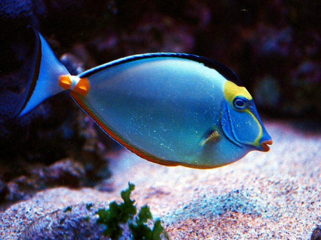 Funny Tropical Fish Wallpaper