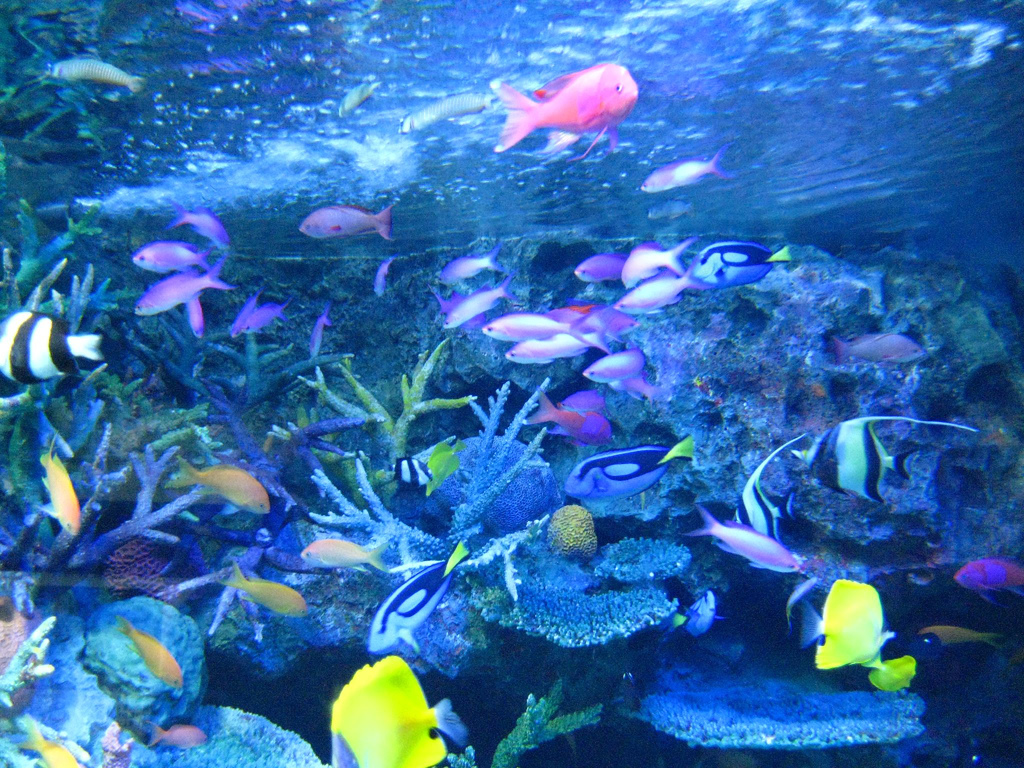 Tropical Island Wallpaper With Fish Tropical Fish Wallpaper
