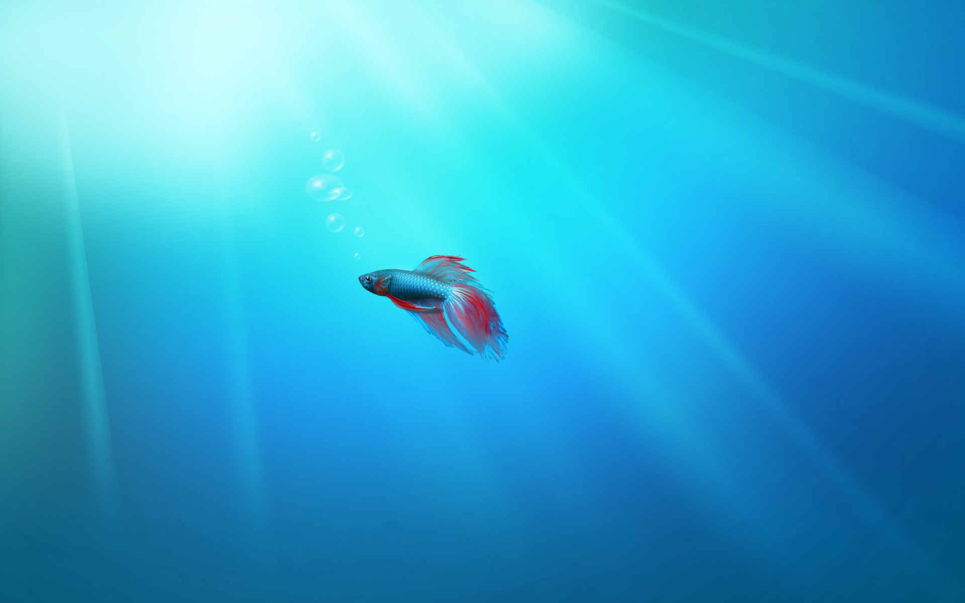 Windows 7 Betta Fish Wallpaper