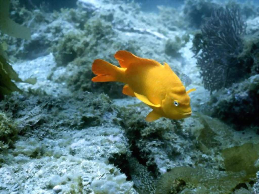 Fish Wallpapers. Images and animals Fish pictures