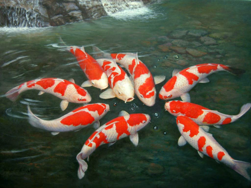 Koi Fish Wallpaper