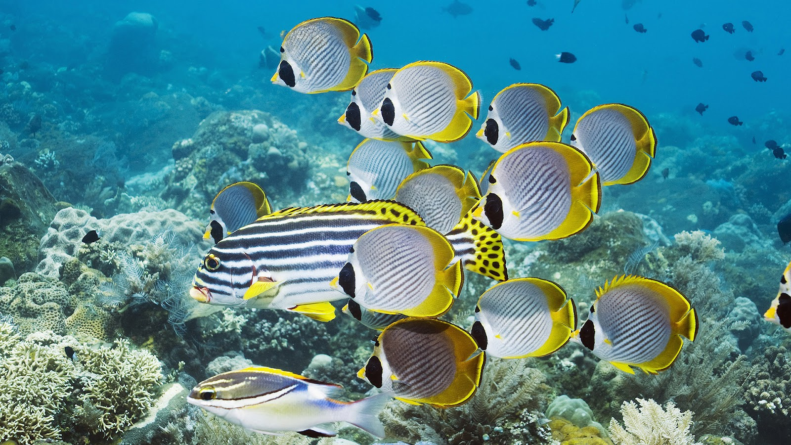 Wallpaper of a Group of Swimming Tropical Fish | HD fish wallpapers