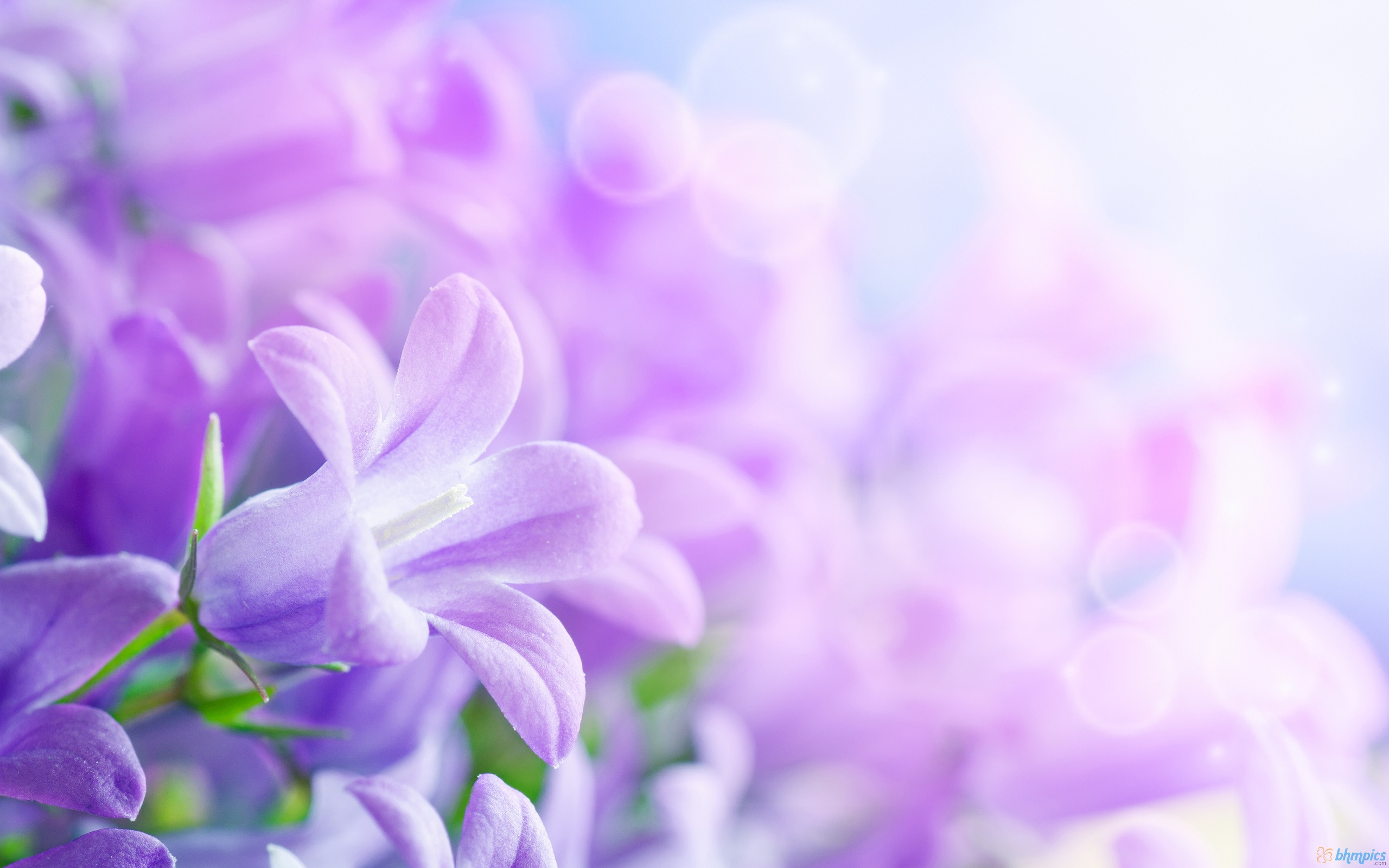 flower 2560×1600 jpg home flowers purple spring flower 2560×1600 Wallpaper