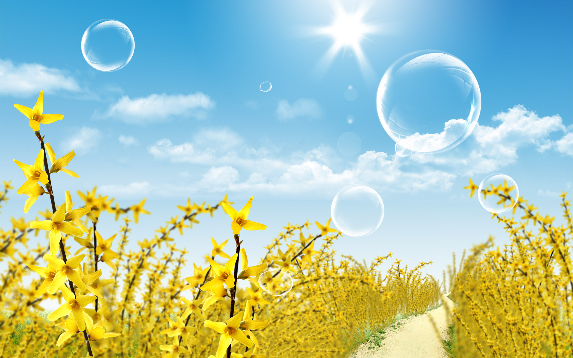 Scenery wallppaer yellow flowers in spring Wallpaper
