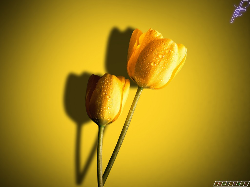 Yellow Flower High Quality HD Wallpaper 2012