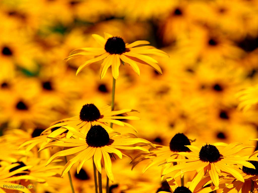 wallpaper yellow flowers wallpaper yellow flowers wallpaper yellow
