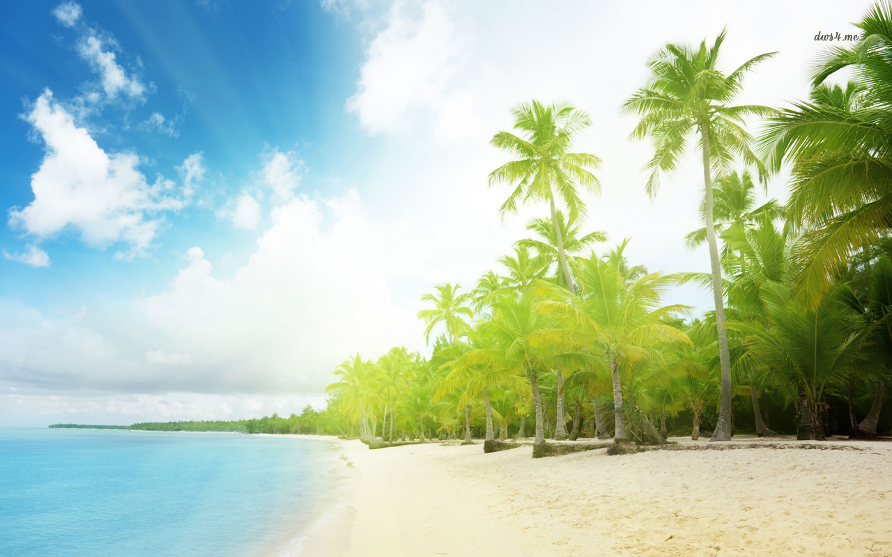 Sunny Palm trees wallpaper - Beach wallpapers