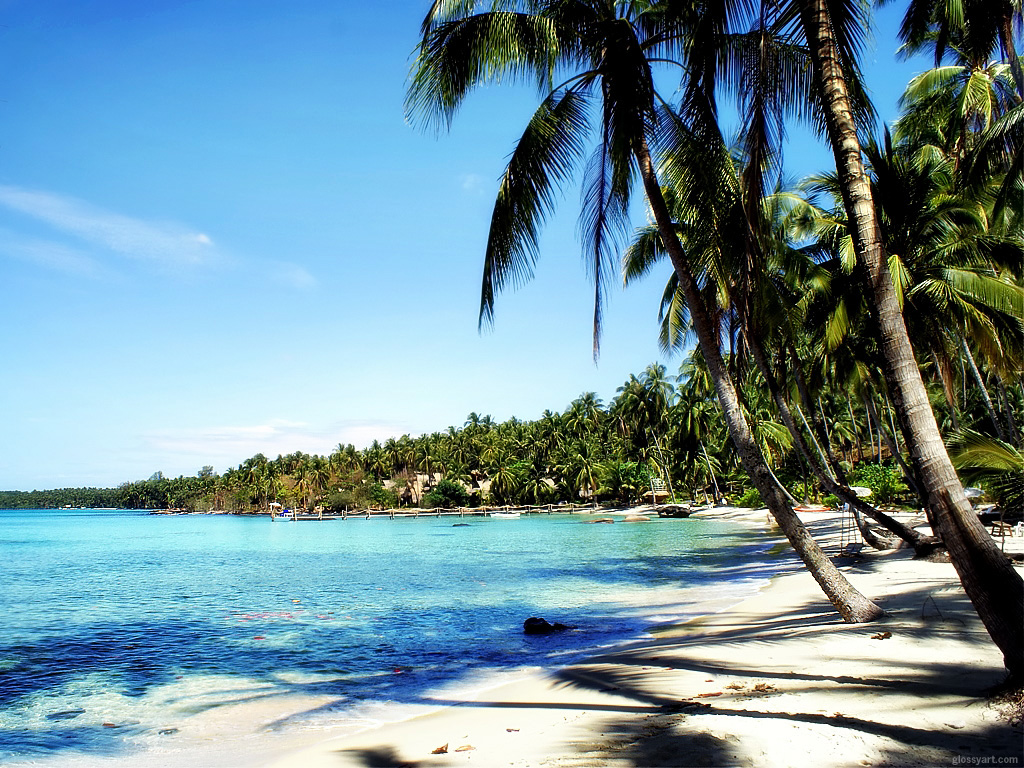 And green palm trees wallpaper title the beach source nxxos download Wallpaper