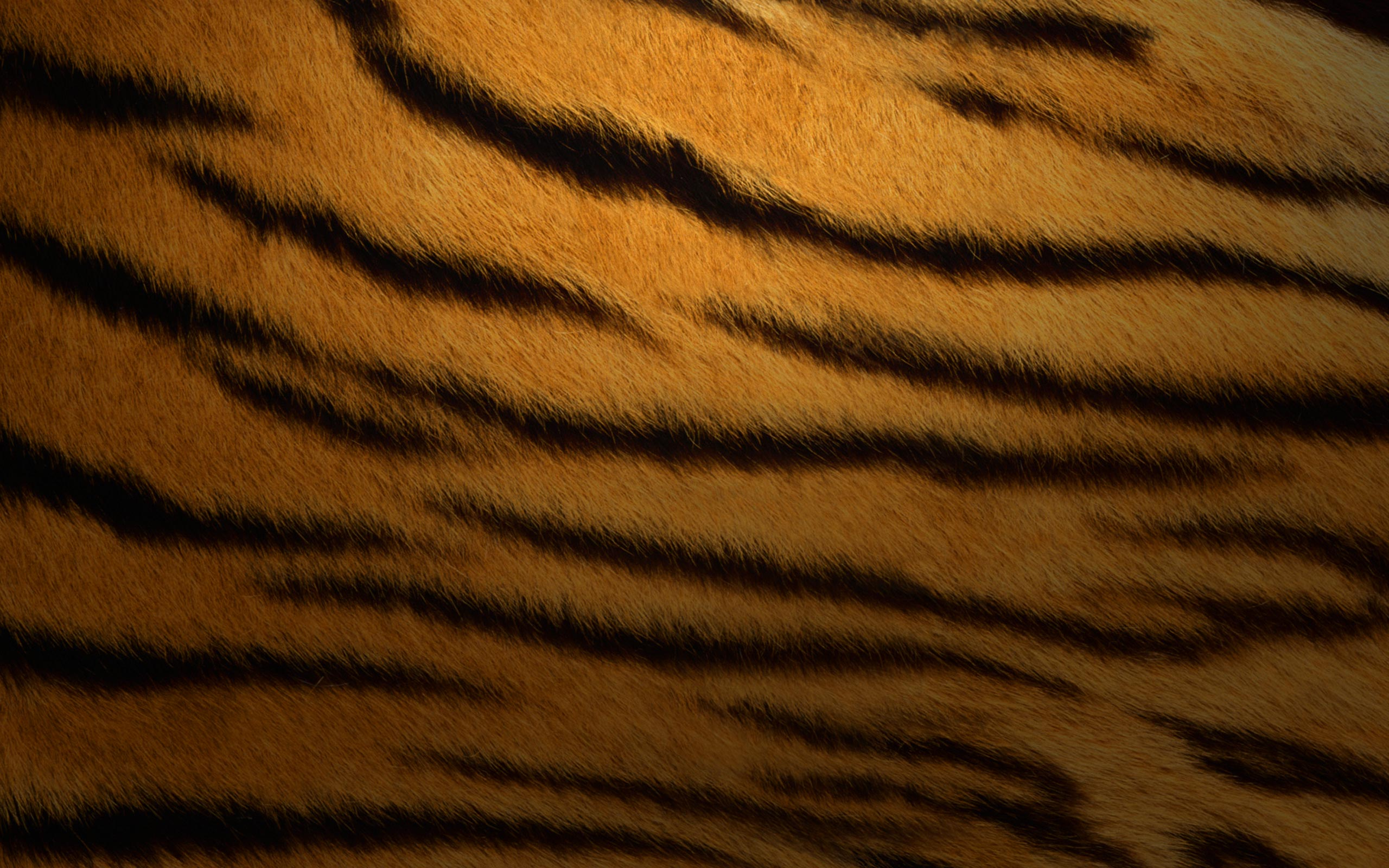 2560×1600 Mac OS Tiger Wallpaper For PC, Mac, IPhone And IPad Wallpaper