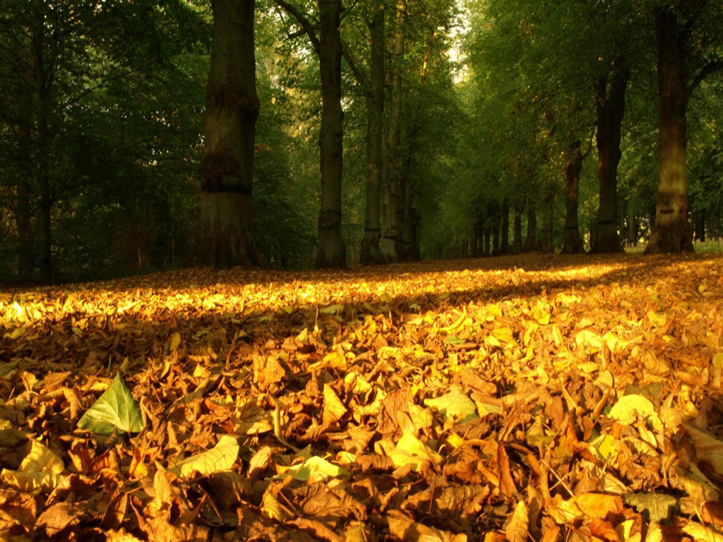 Nature Autumn Fallen Leaves, Free Beautiful Wallpaper Download For Wallpaper