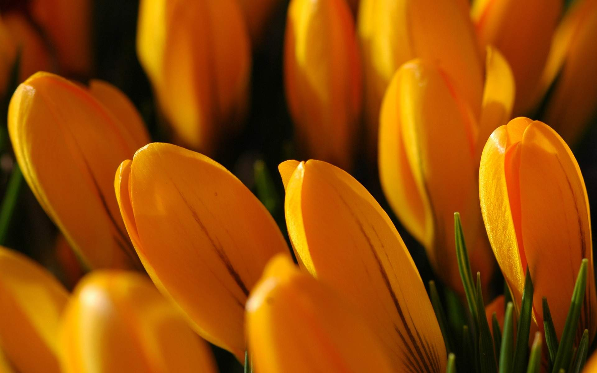 Beautiful Blooming Flowers Pictures And Wallpapers6   All Flowers Wallpaper