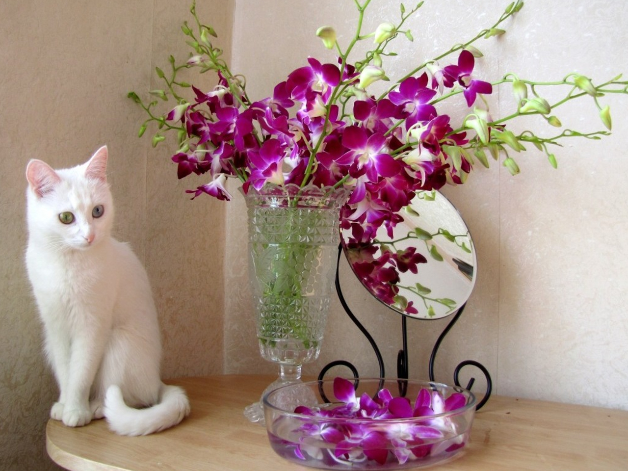, Cat, Cat Face, Cats, Colorful, Colors, Cute, Eyes, Face, Flowers Wallpaper