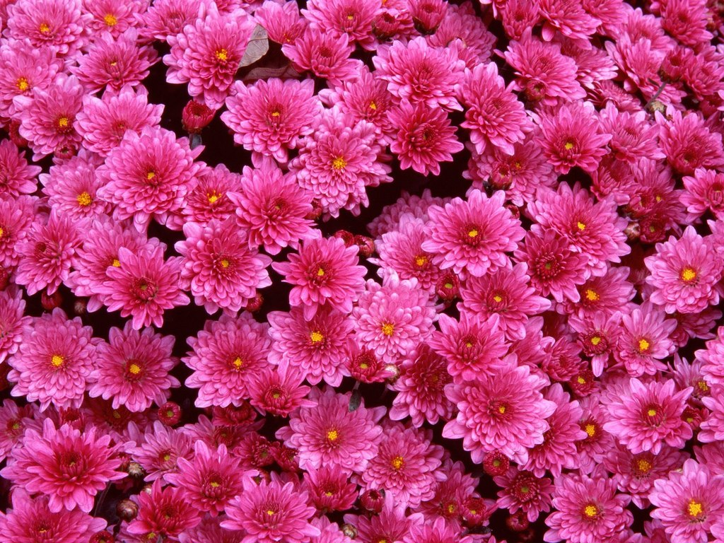 Save Massive Bunch Of Bright Pink Flowers To Your Desired Location Wallpaper