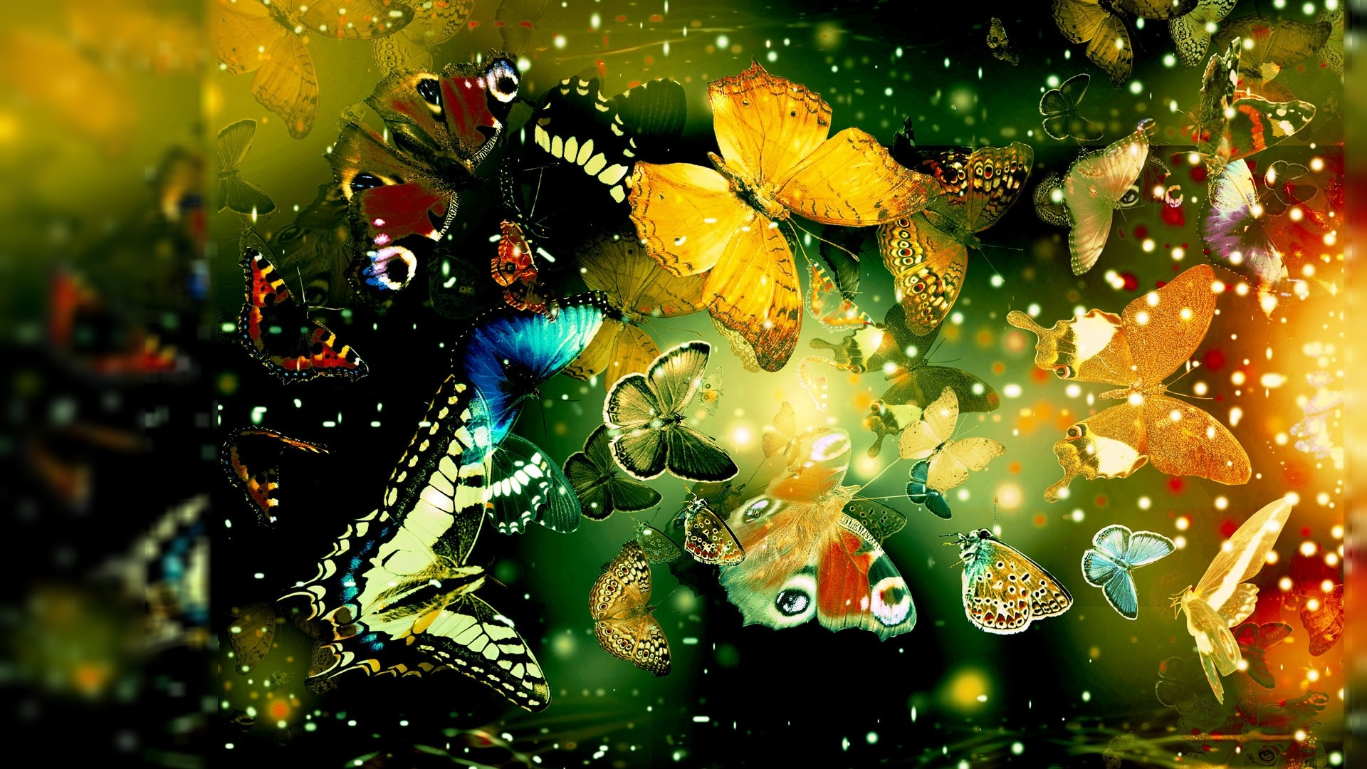 Cool Butterfly Designs HD Wallpaper | Unique Nature HD Wallpapers Wallpaper