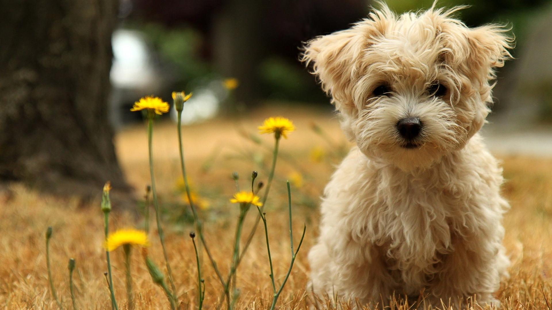 Cute Dog Pictures Background HD Wallpaper Cute Dog Pictures Wallpaper