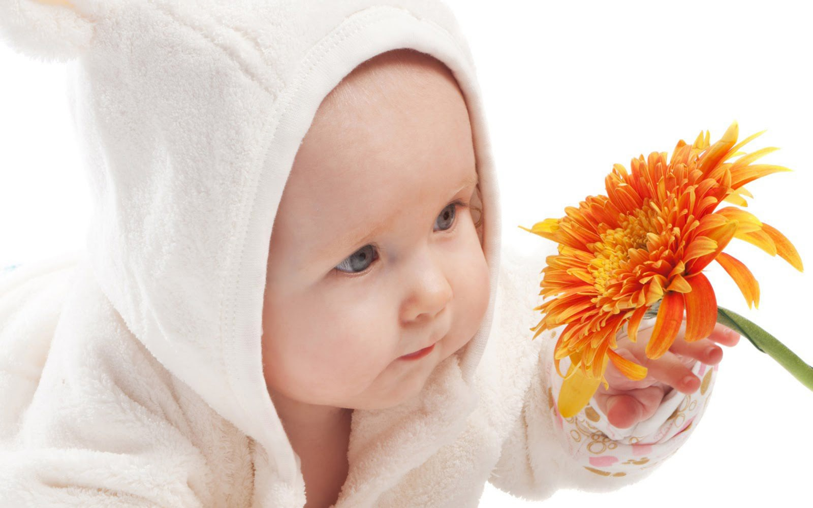 Cute Baby Boy And Beautiful Orange Color Flower HD Wallpaper | Cute Wallpaper
