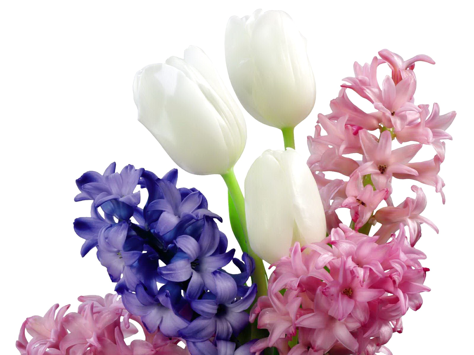 Blue And Pink Hyacinth Flowers Wallpaper | All Flowers | Send Flowers Wallpaper