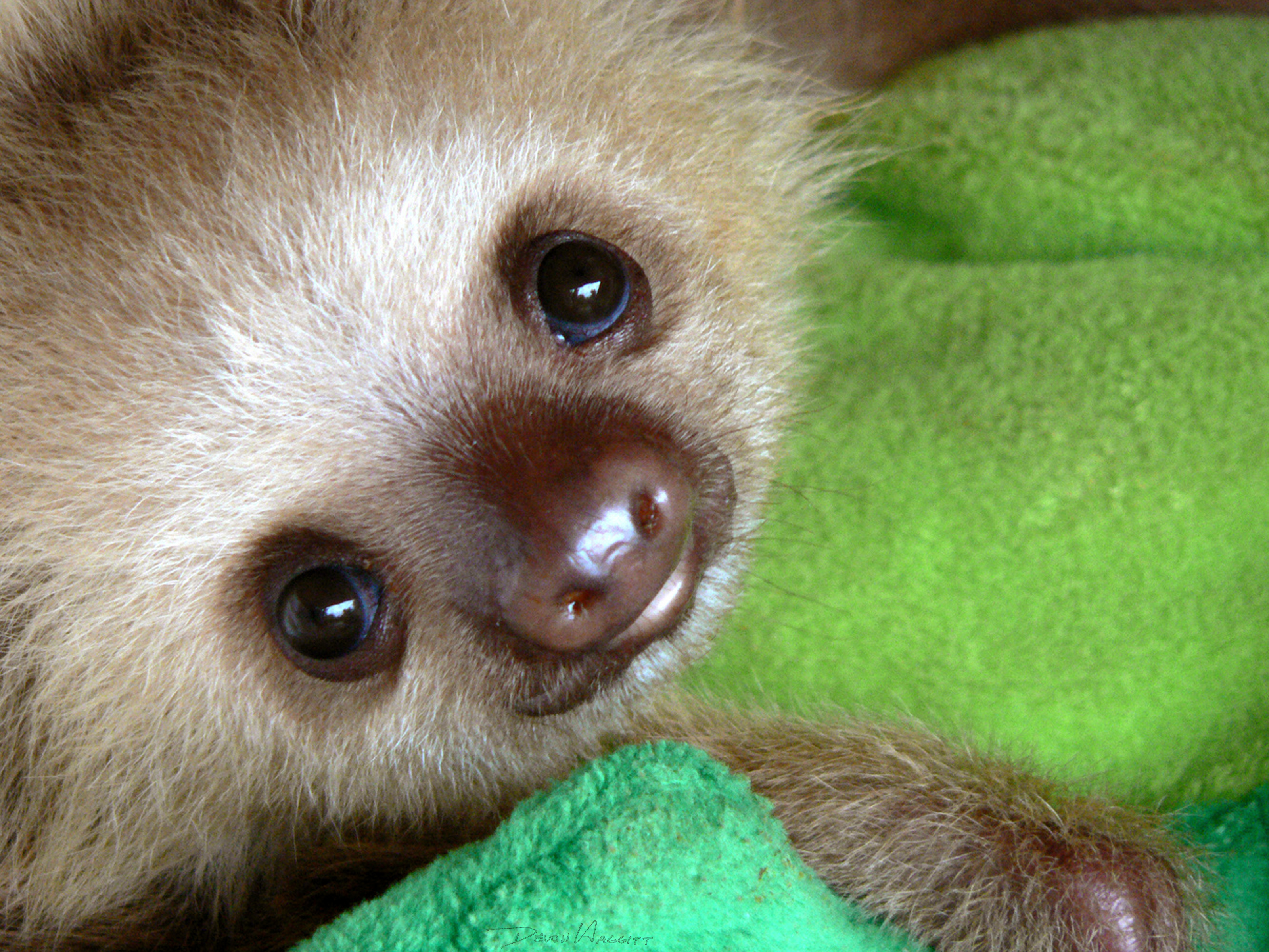 WATCH > Kristen Bell's Funny Sloth Footage: Hilarious Or Ridiculous Wallpaper
