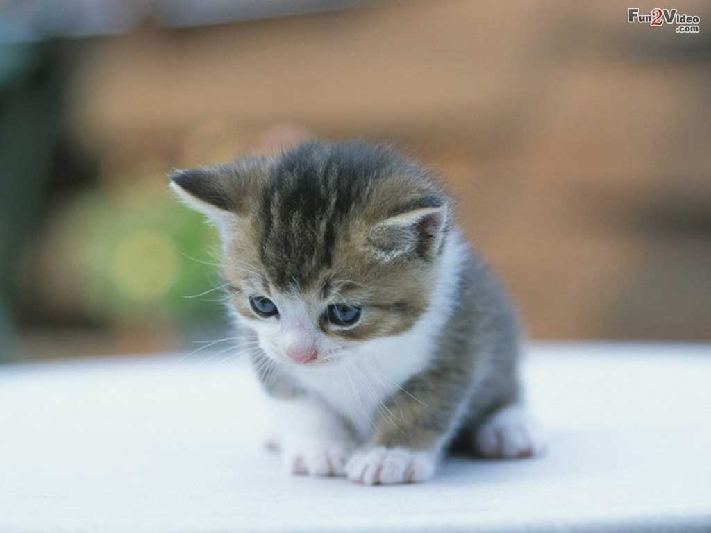 Baby Kittens Cute Cats And Kittens Kitten Pict #2738 Hd ...