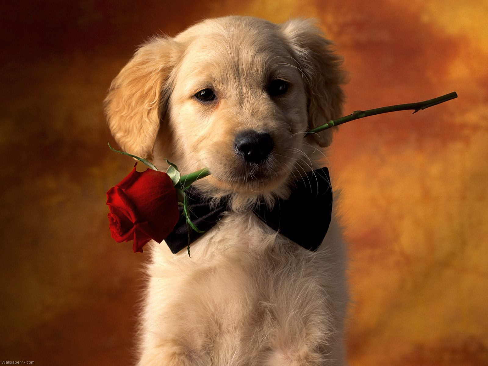 Lover, 1600×1200 Pixels : Wallpapers Tagged Baby, Dogs, Funny Animals Wallpaper