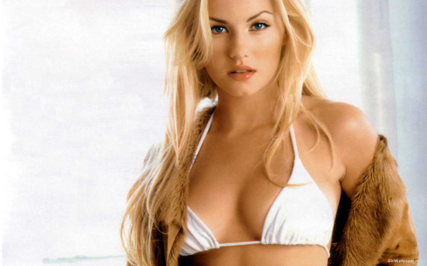 Elisha Cuthbert White Bikini Top Wallpaper 1440×900 Photo 28865 Wallpaper