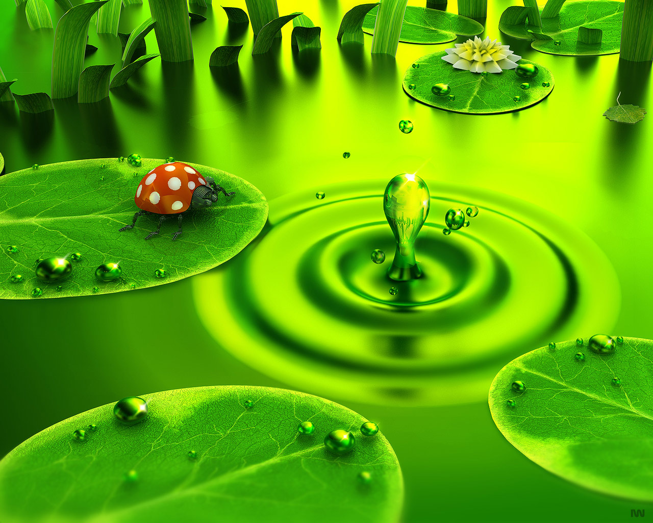 Nature Green Full Hd Animals Abstract Insects Water Wallpaper With Wallpaper