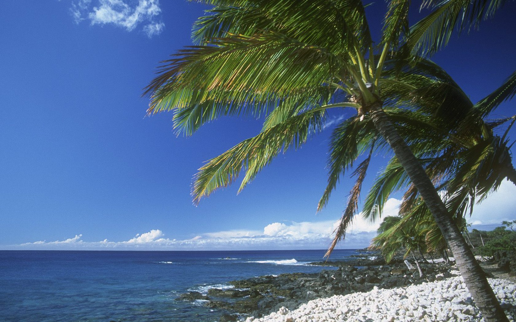 Hawaiian palm beach blue coast current nature ocean palm tree