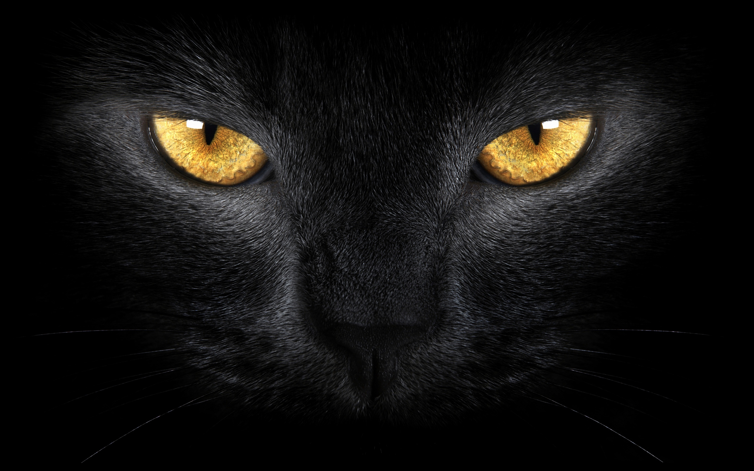 Black Cat Eyes Wallpapers Pictures Photos Images Wallpaper
