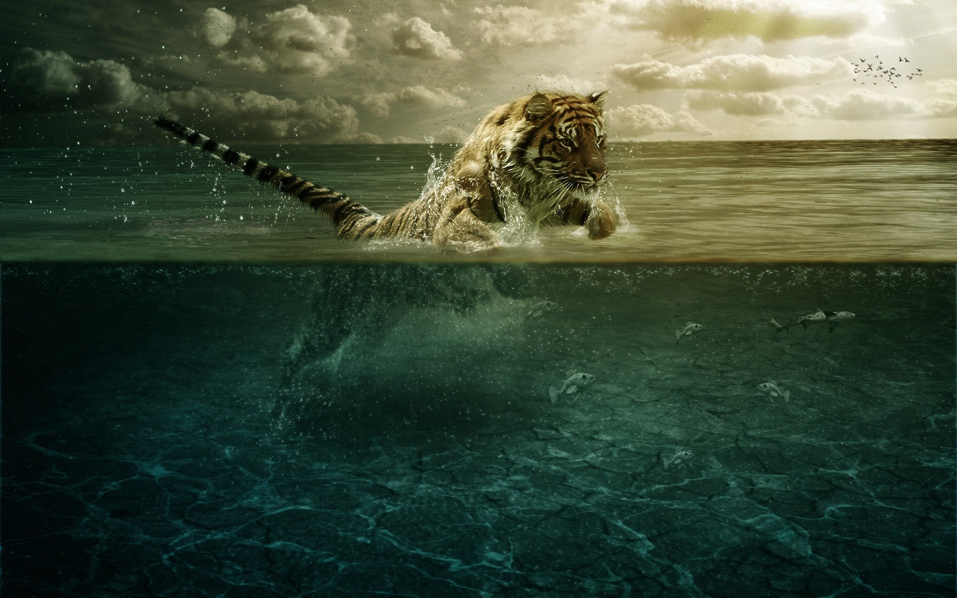 Tiger Swimming HD Wallpapers | Unique Nature HD Wallpapers Wallpaper