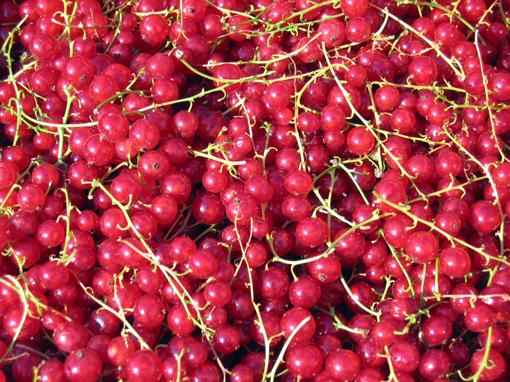 Pints Red Currants (about 6 Cups Berries Without Stems) Wallpaper