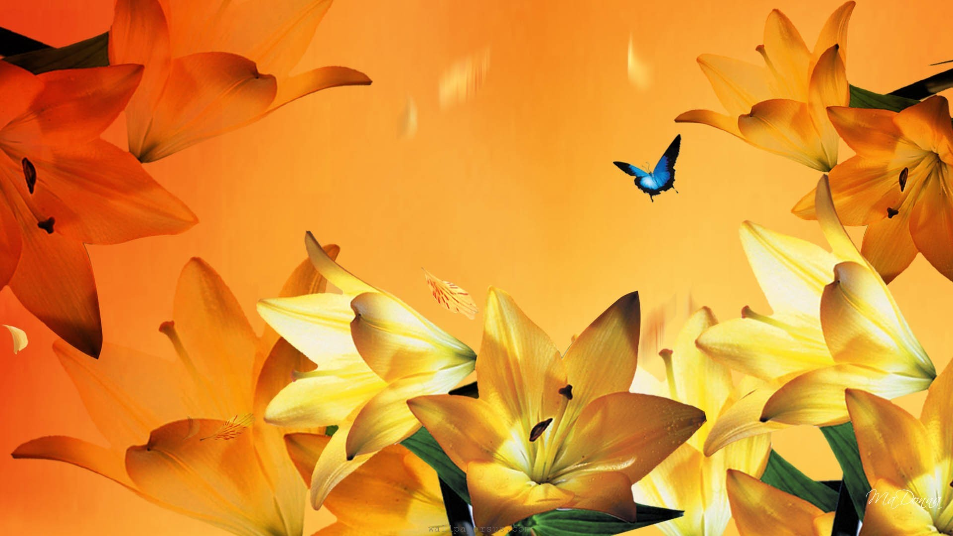 Floral, Orange, Petals, Summer, Yellow, Lilies, Flowers, Lily, Blue Wallpaper