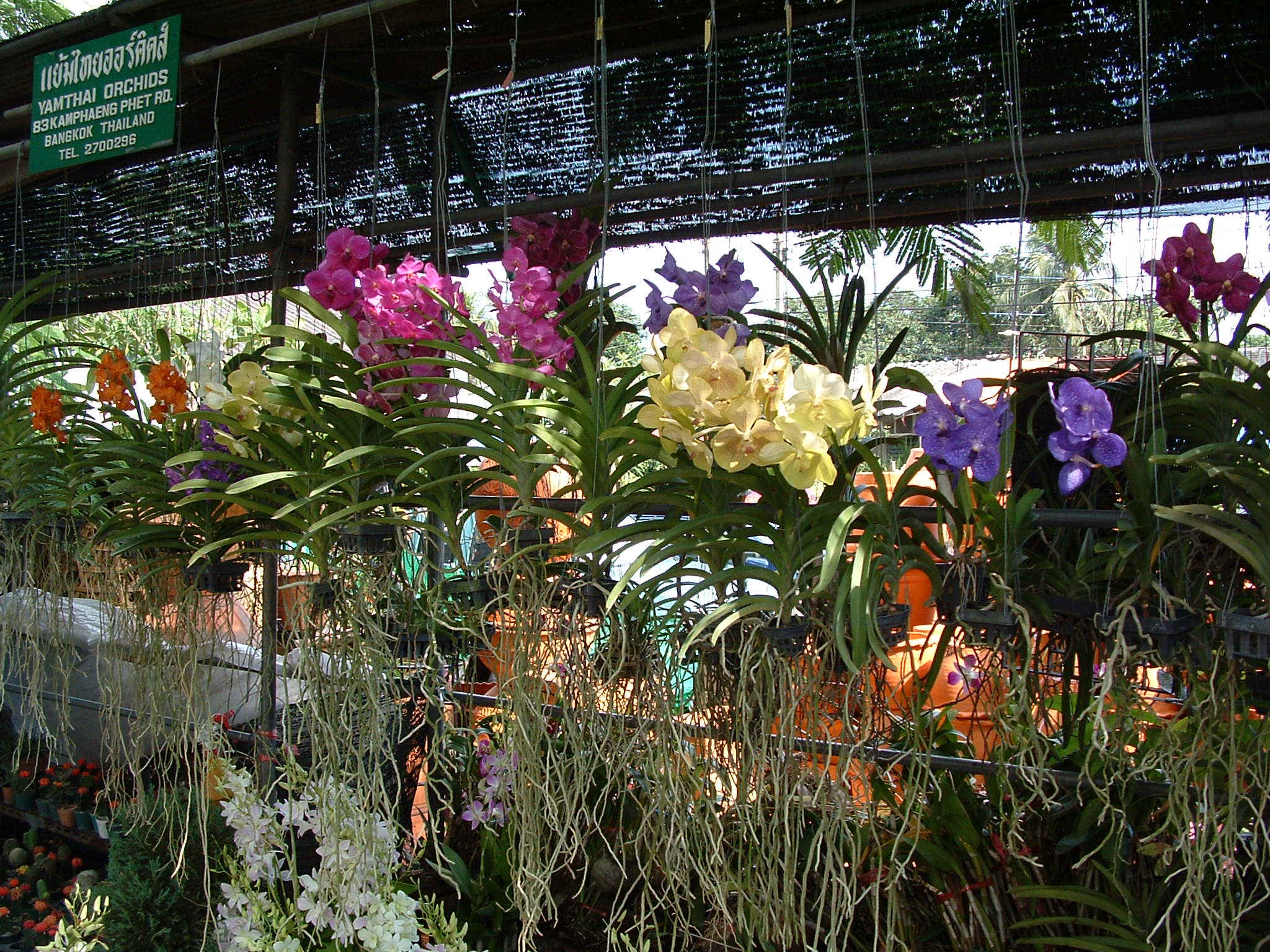 Orchids From Siam Orchids Thailand Co., Ltd. Wallpaper