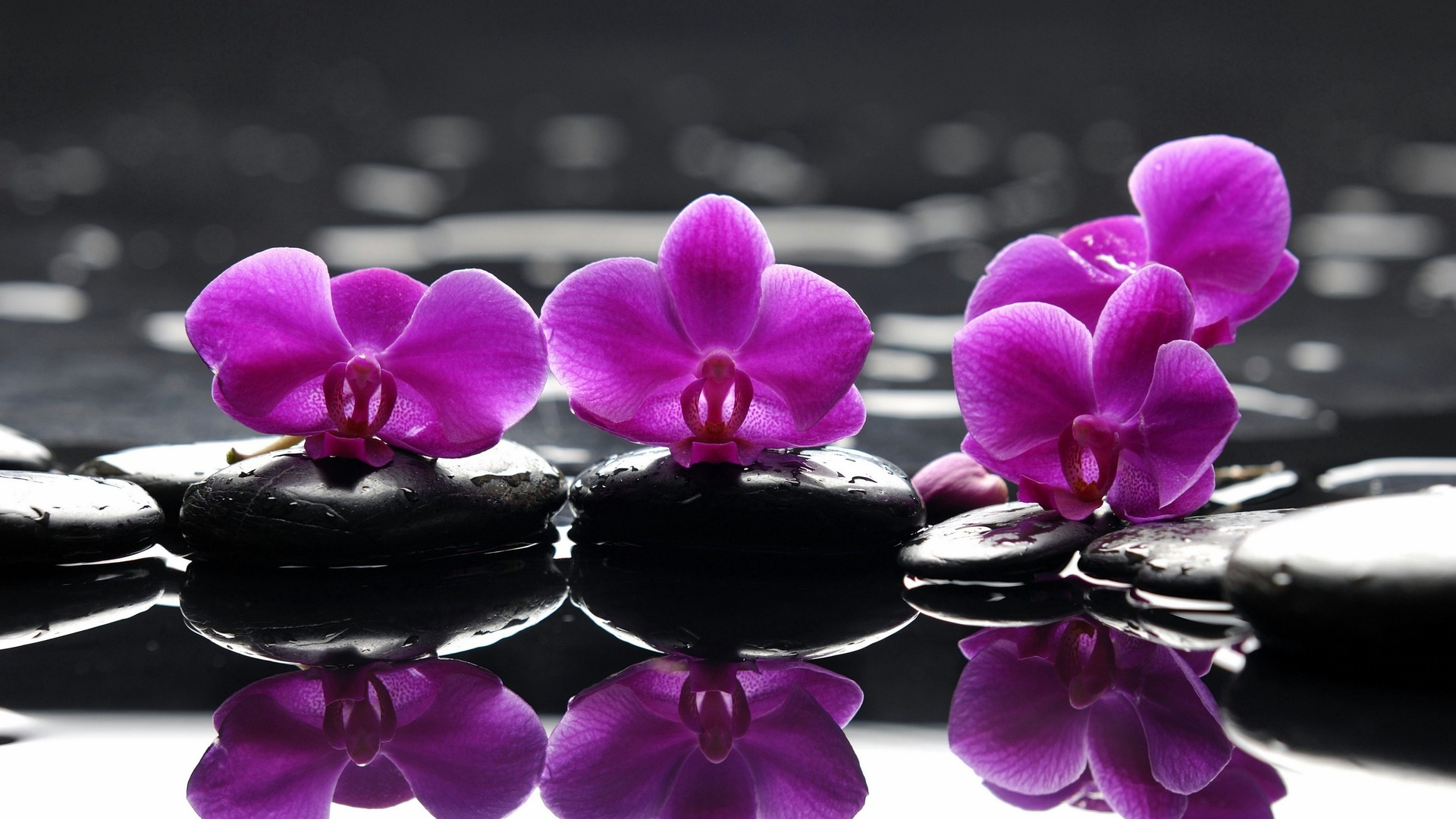 Purple Orchids 1920×1080 Flower Wallpaper   #1225 Wallpaper