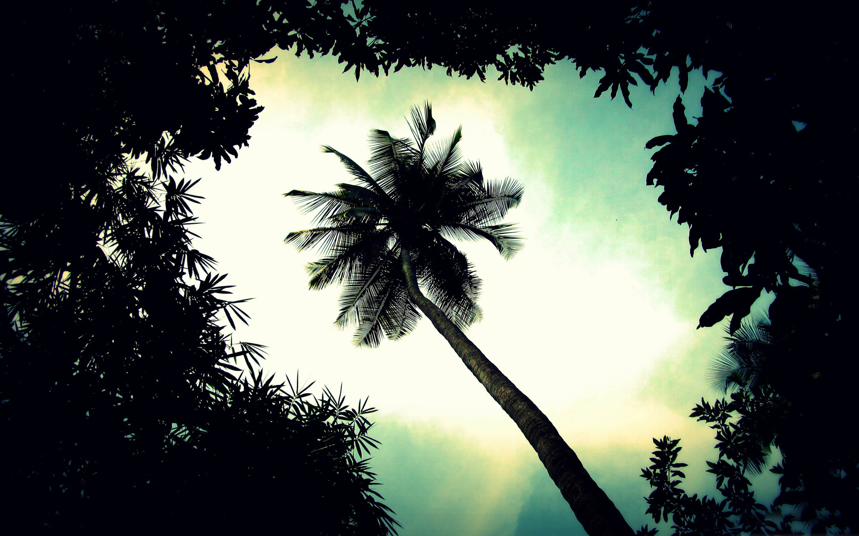 Palm Trees In The Wind Desktop Wallpaper #1505 Hd ...
