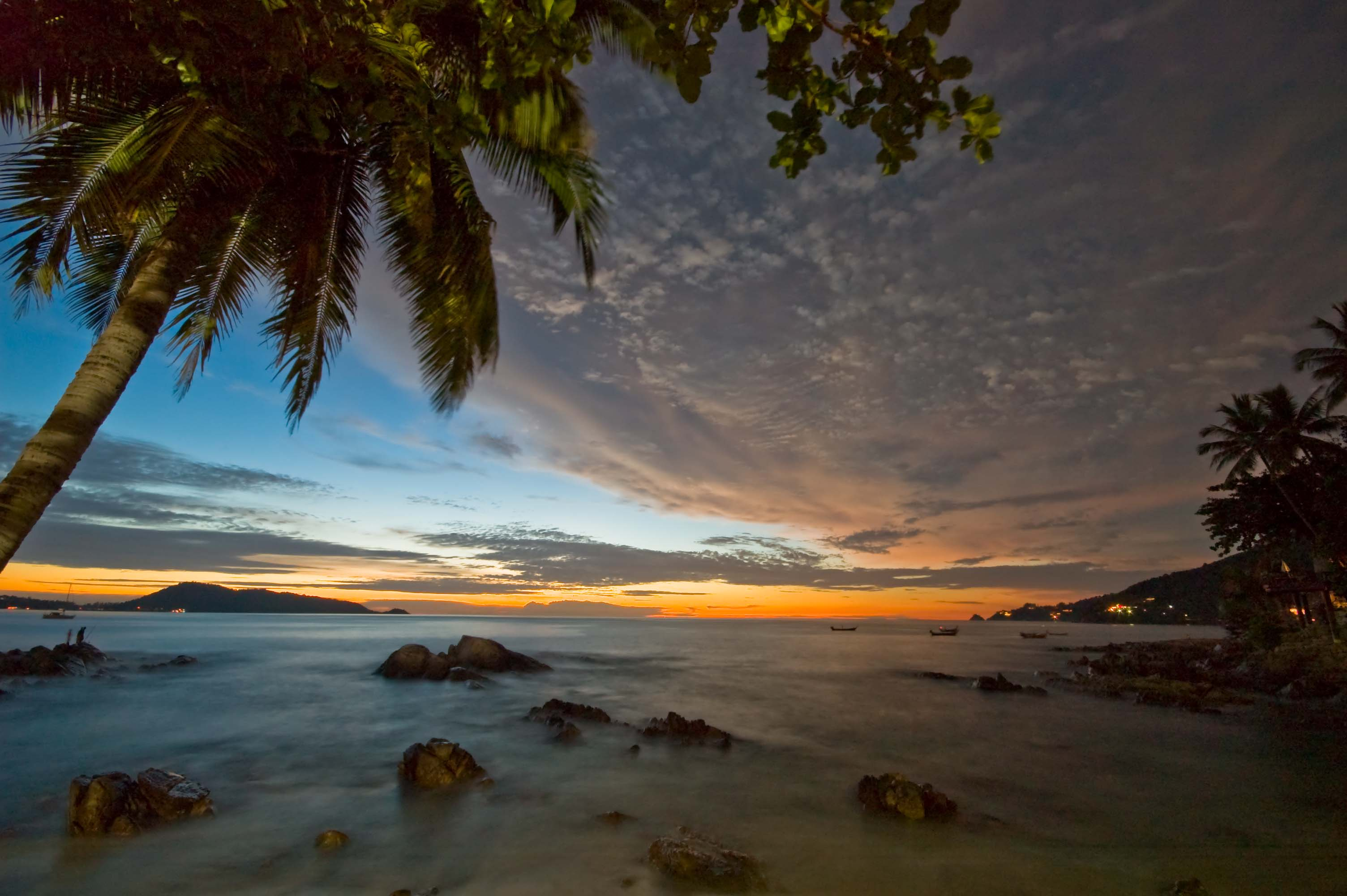 palm tree at dawn patong beach Wallpaper