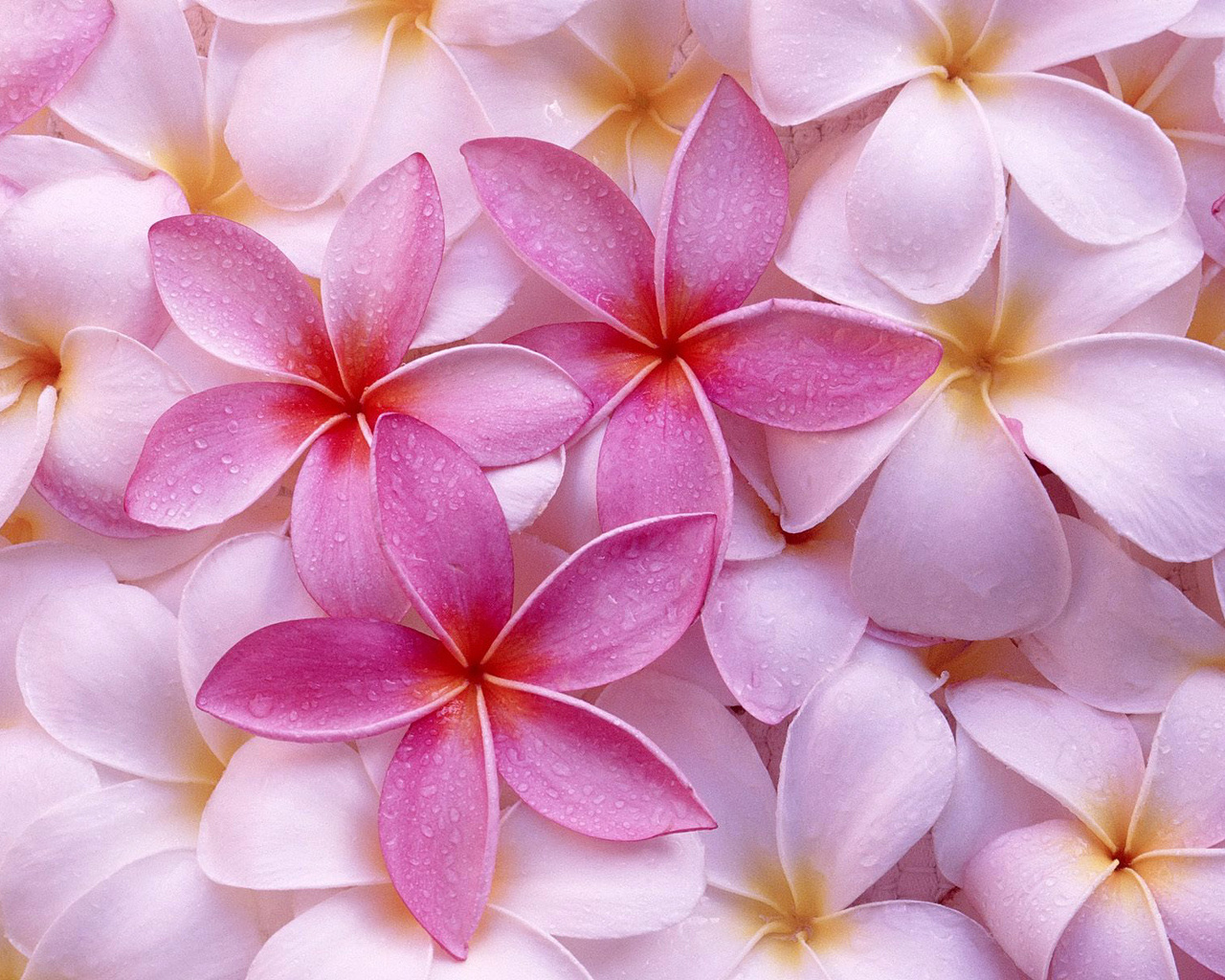 Pink Colors Wallpapers | HD Wallpapers Wallpaper