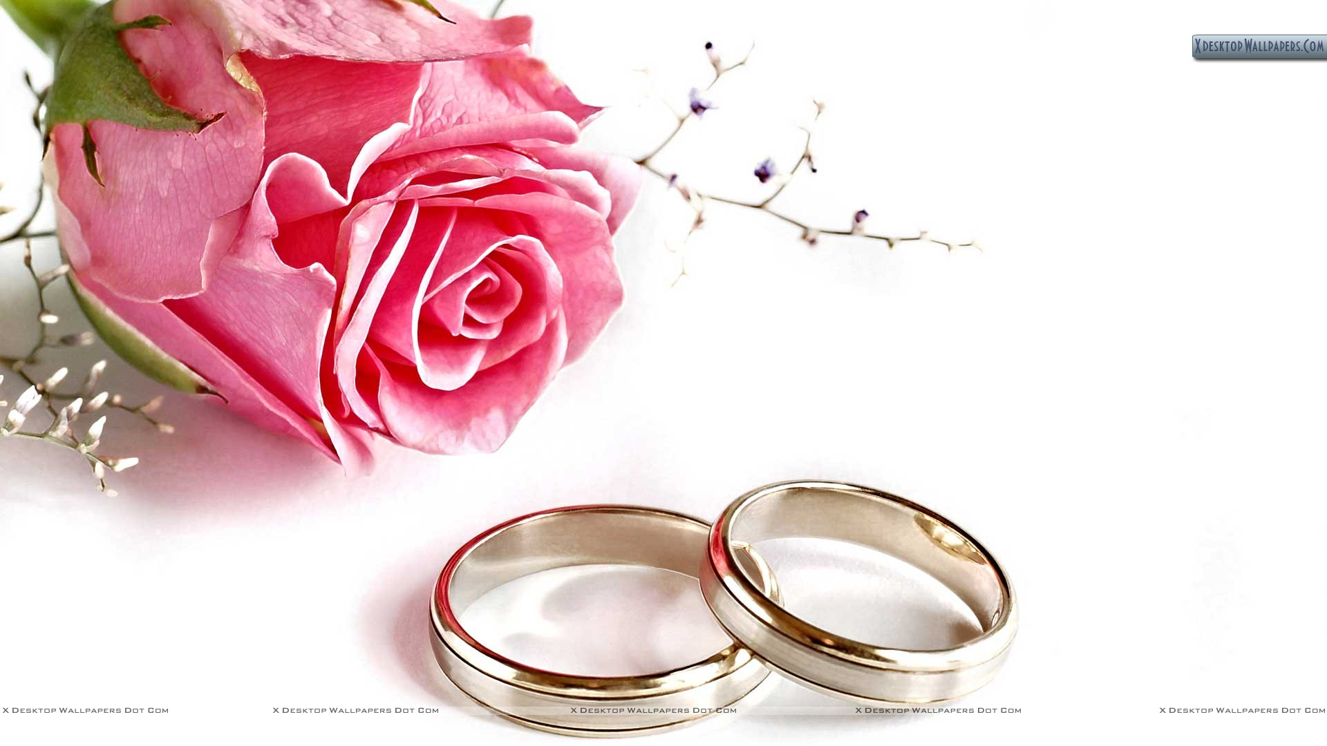 Pink Rose With Two Wedding Rings On White Color Paper Wallpaper