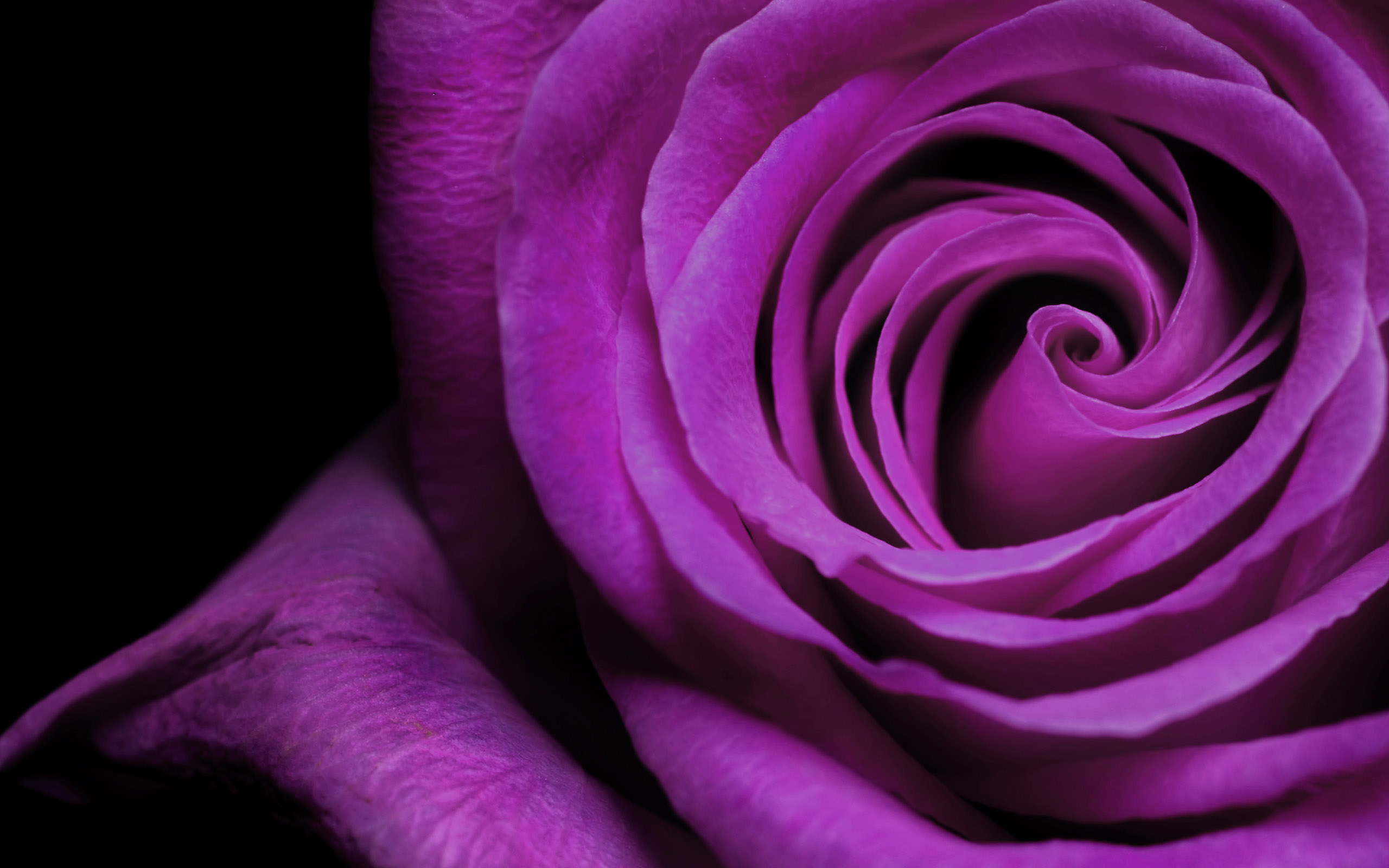Beautiful Purple Flowers Wallpaper | HD Wallpapers   High Definition Wallpaper