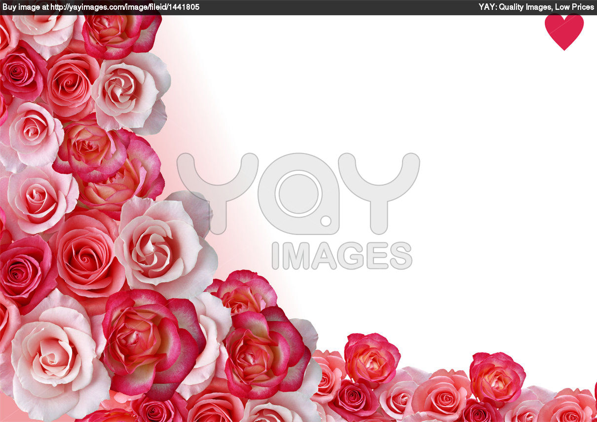 Free Image Of Abstract Border, Flowers, White And Rose Background Wallpaper