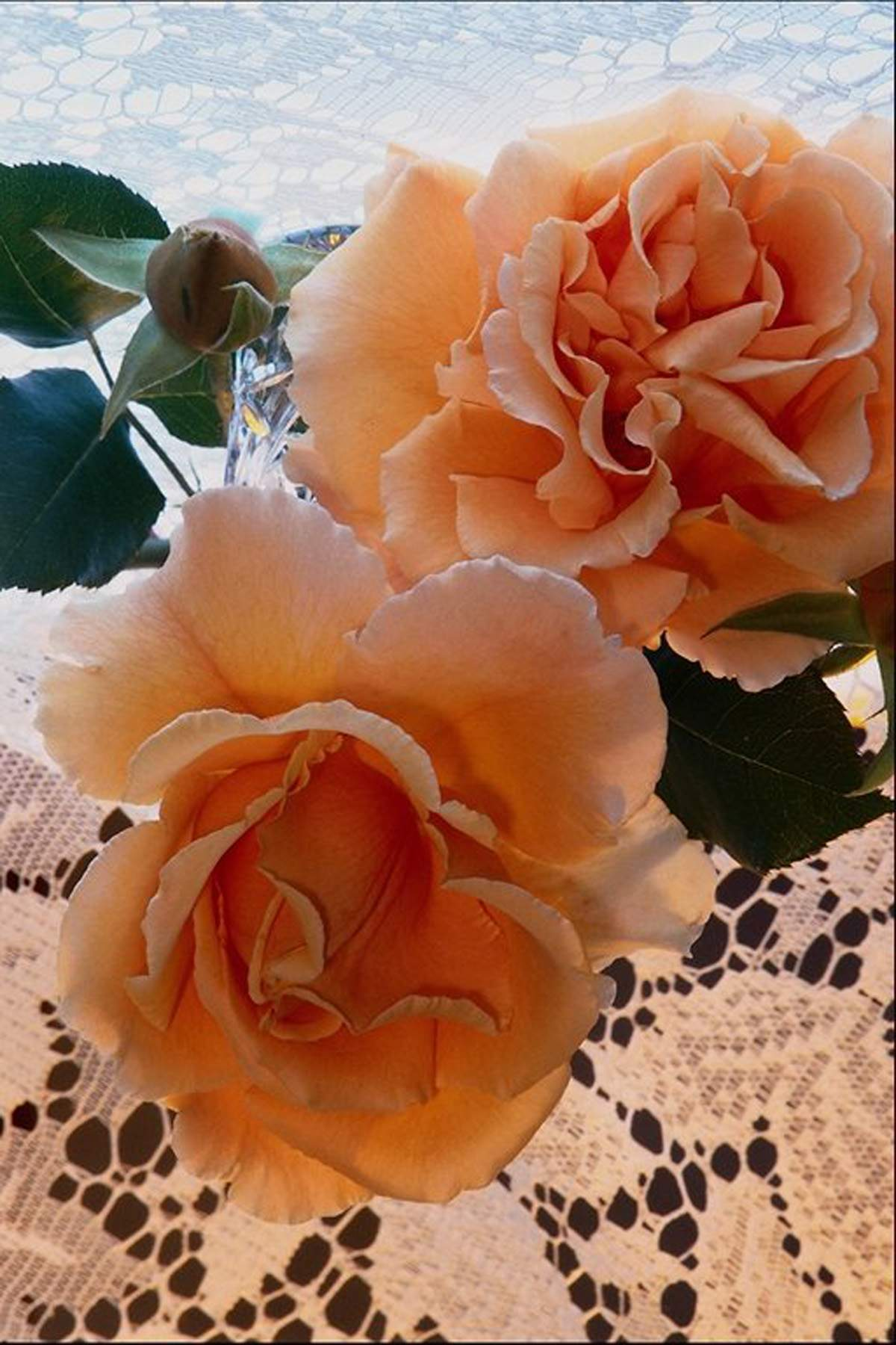Nice Peach Colored Rose Flowers Pictures | All Flowers | Send Flowers Wallpaper
