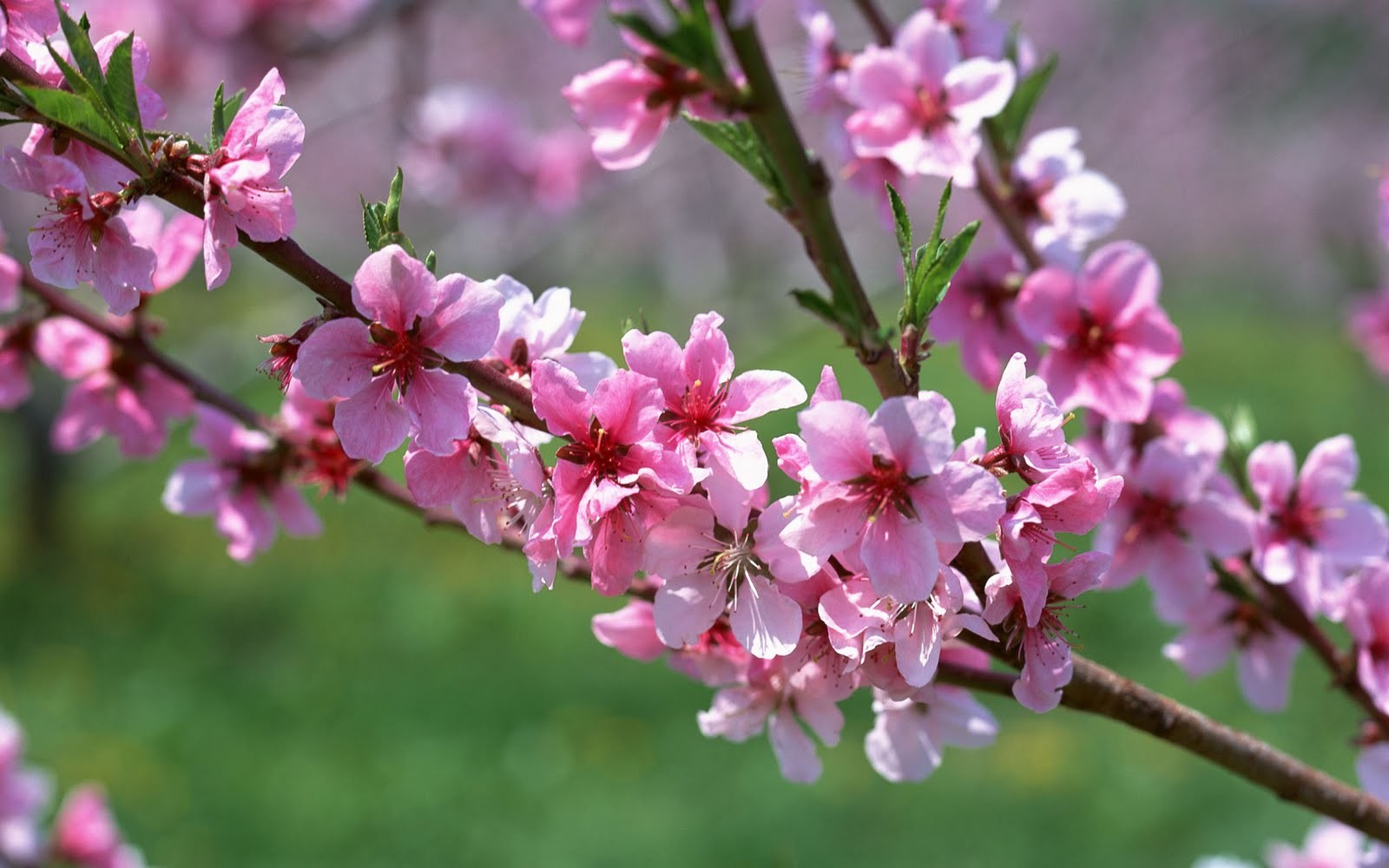 Spring-Pictures-HD-26