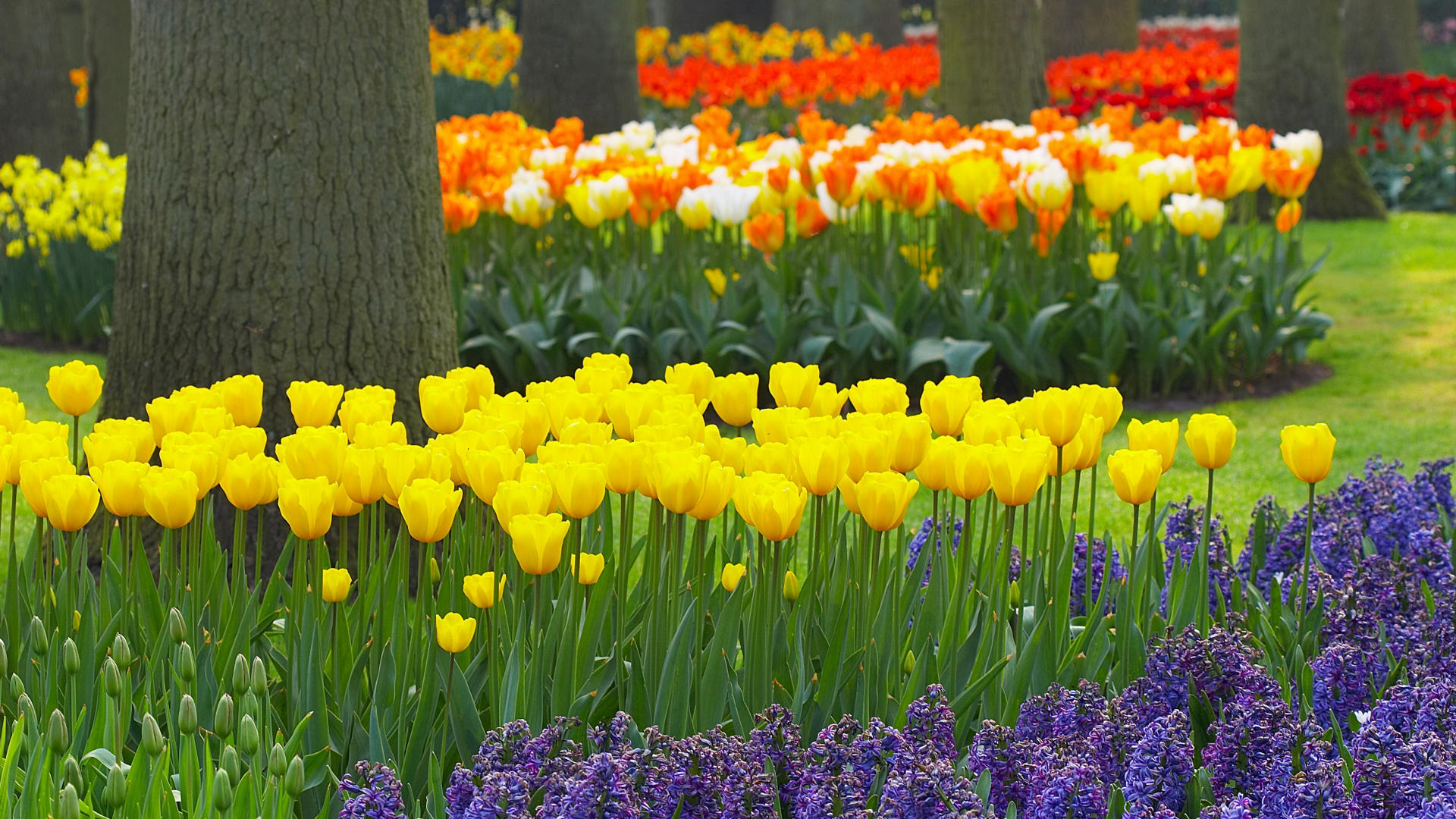 Spring Garden Wallpaper | Wallcapture.com Wallpaper