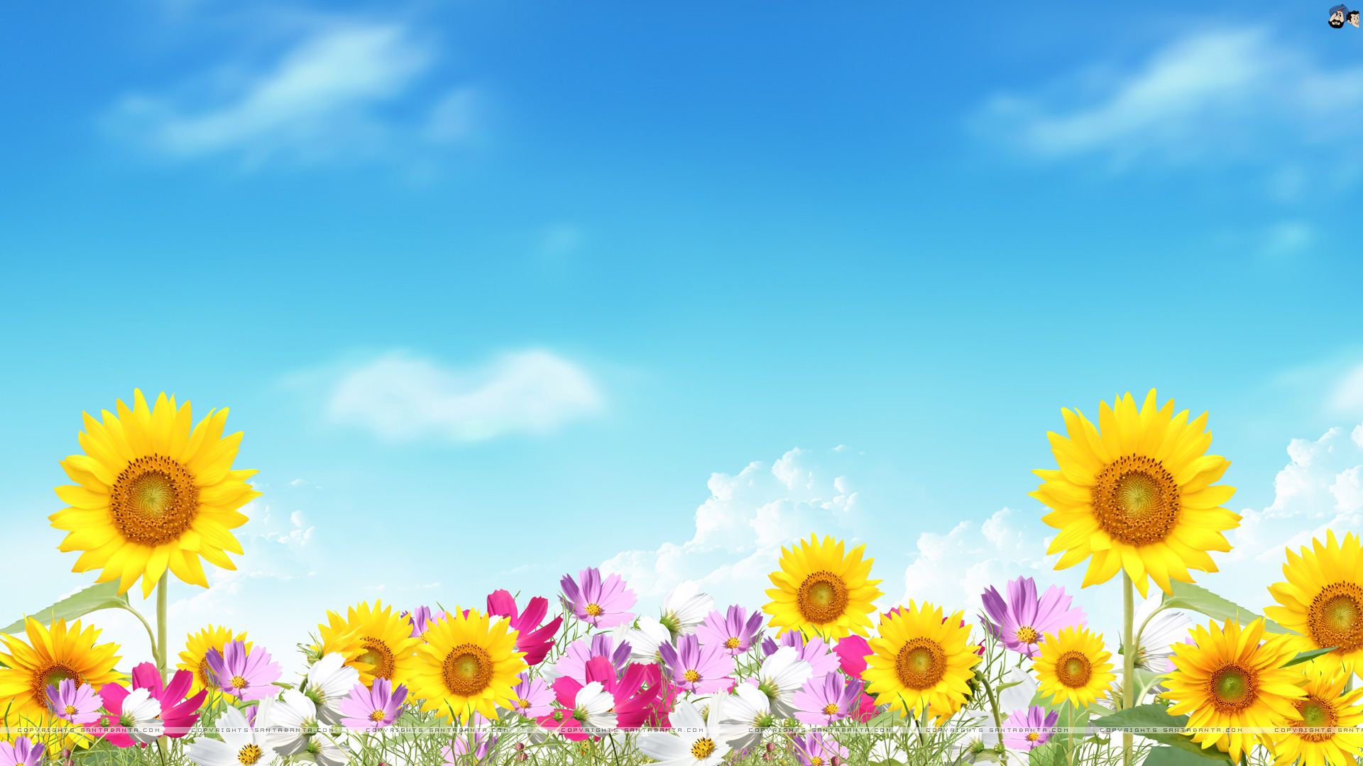 Summer Flower Picture HD Wallpaper   Summer Flower Picture Wallpaper