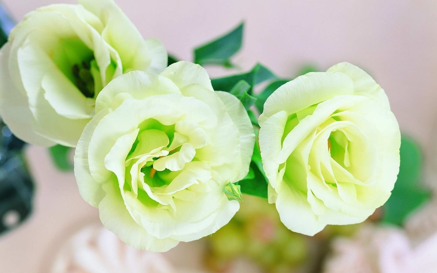 White Roses Bunch Flowers HD Wallpaper   White Roses Bunch Flowers Wallpaper