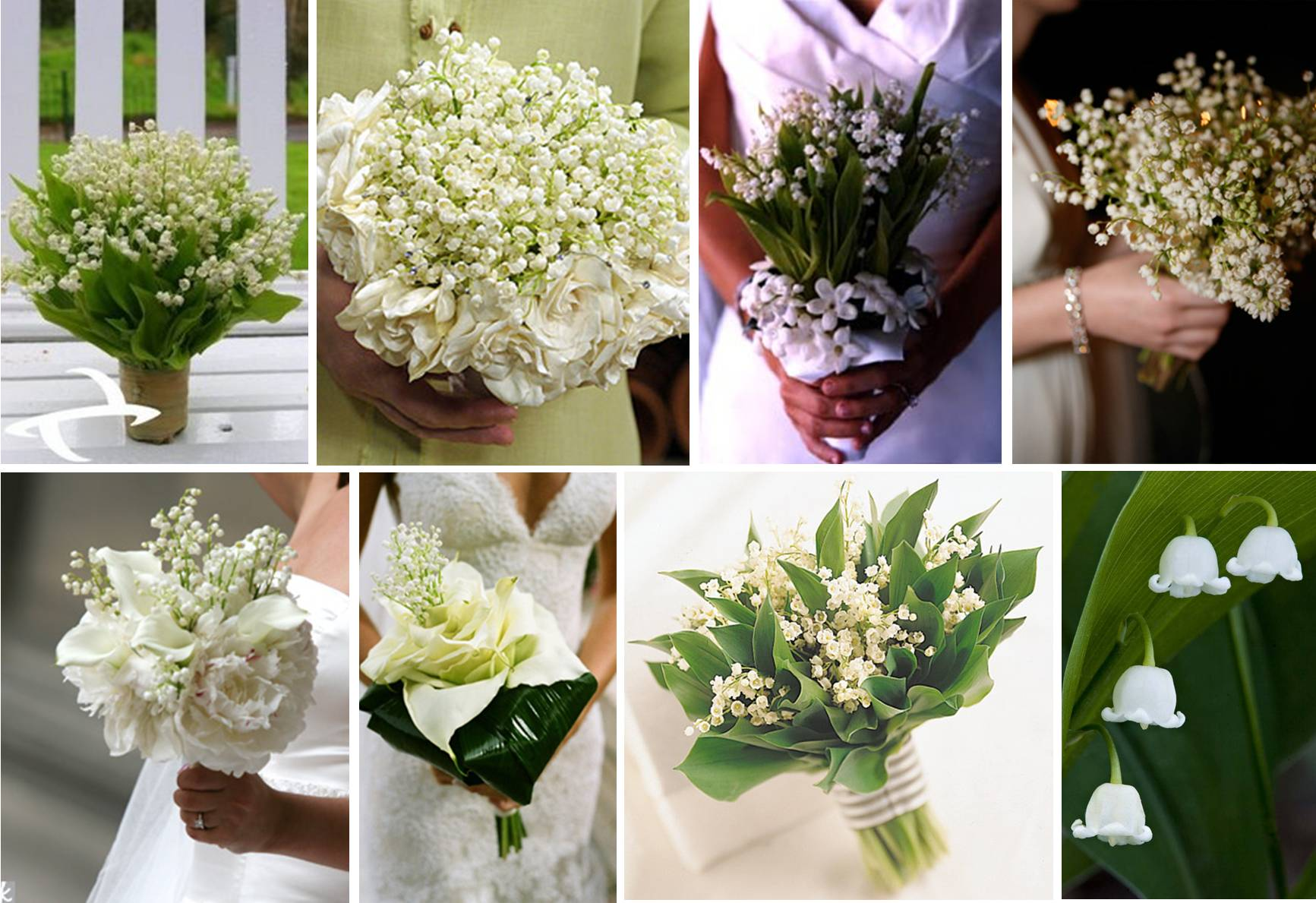 Blooming Lily Of The Valley! | One White Dress Wallpaper