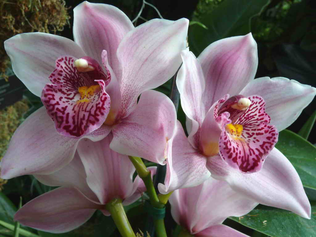 White-Orchid-Flowers-111