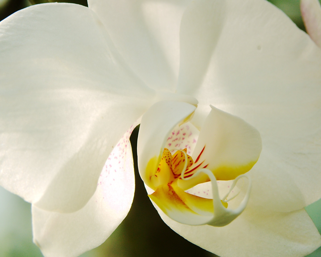 White-Orchid-Flowers-70