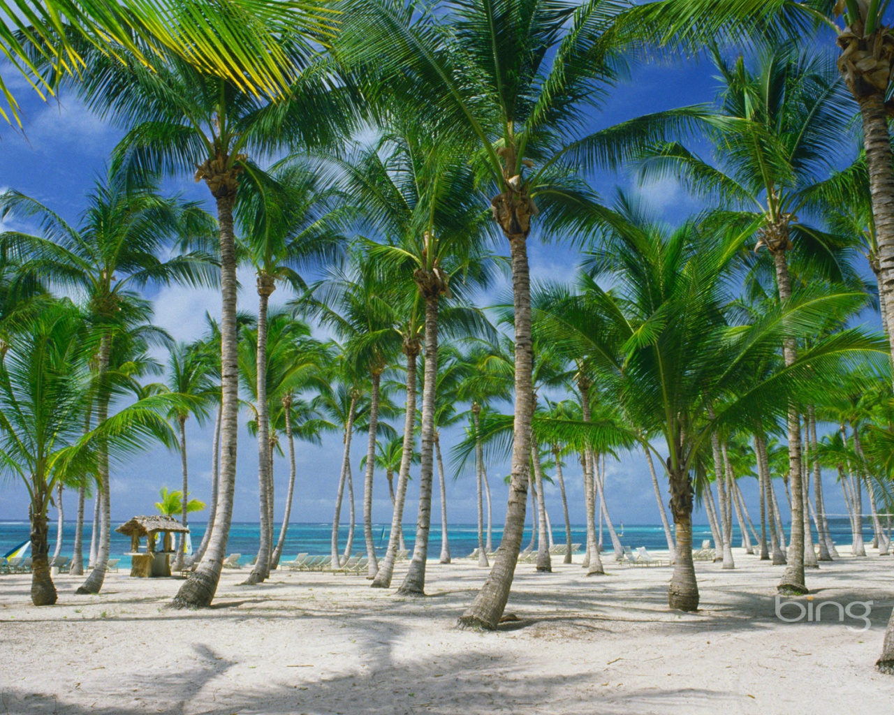 Palm Tree Coconut Tree Wallpapers HD