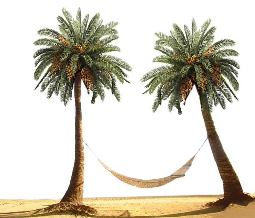 Palm Trees Wallpapers and Palm Trees Backgrounds
